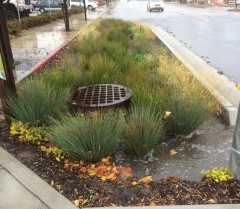 Examples of Bioretention Facilities - 21st Street Bioret Filling Paso Robles - Credit Cannon